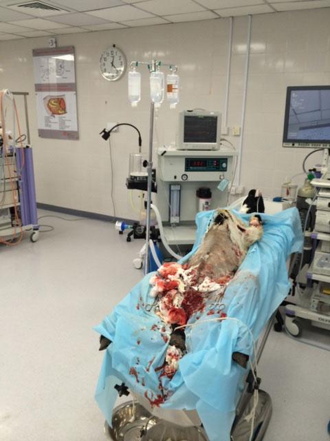 BleedStop Clinical Trials 1